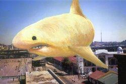 lone-shark-1-6248a